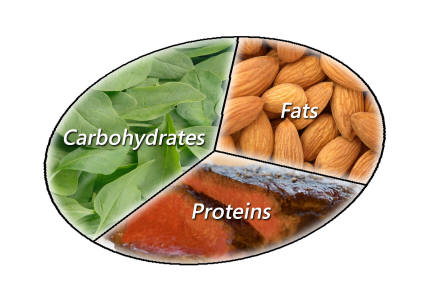Protein food